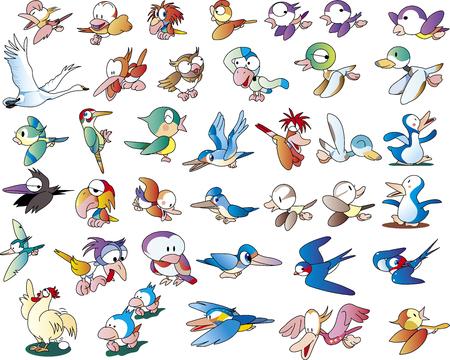 Colección Birds Cut