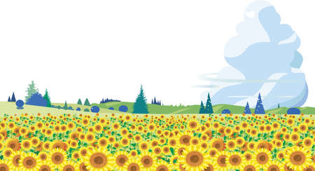 Sunflower blooming summer blue sky background