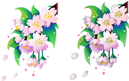Cherry Blossom Line Drawing and Surface Painting