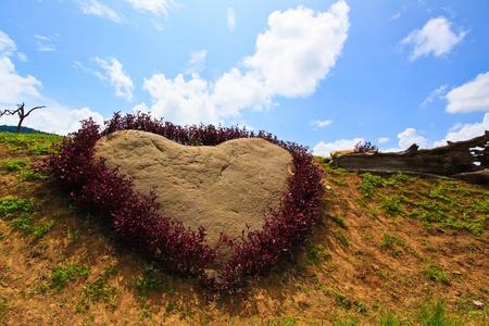 Purple heart in the garden of Thailand  photo