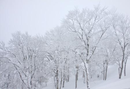 ブリザード覆われた冬日本の樹