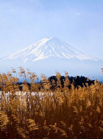 foreground: Fujiyama mount with grass foreground