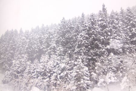 strom: Snow strom on the forest with windy