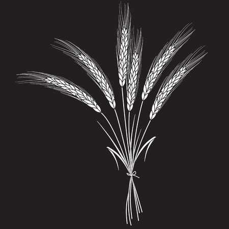White wheat ears bandaged with ribbon isolated on black background. Set of wheat ears. Background for farms and bakeries. Collection of elements for print products, page and web decor or other design.