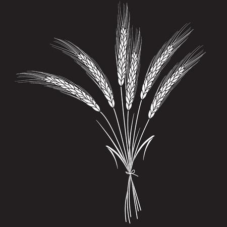 Witte tarwe oren verbonden met lint geïsoleerd op zwarte achtergrond. Set van tarwe oren. Achtergrond voor boerderijen en bakkerijen. Verzameling van elementen voor gedrukte producten, pagina en web decor of ander ontwerp.