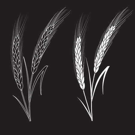 Black and white wheat ears isolated on black background. Set of wheat ears. Background for farms and bakeries. Collection of elements for company logos, print products, web decor or other design. Illustration