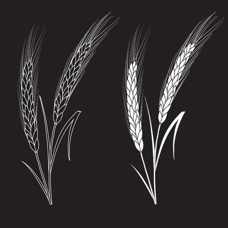 Zwart-witte tarweoren die op zwarte achtergrond worden geïsoleerd. Set van tarwe oren. Achtergrond voor boerderijen en bakkerijen. Verzameling elementen voor bedrijfslogo's, printproducten, webdecor of ander ontwerp. Stock Illustratie