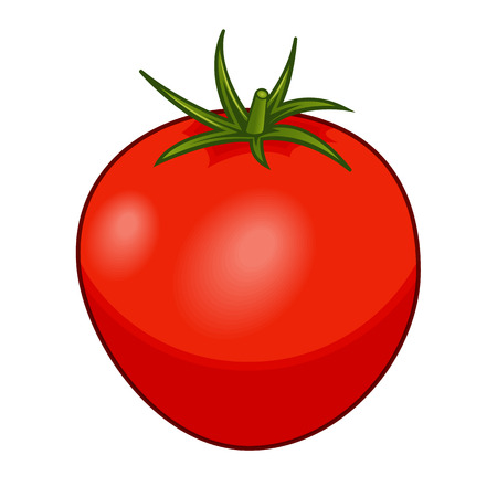 Fresh red tomato with green stem with shadows and highlights isolated on white background isometric front view.