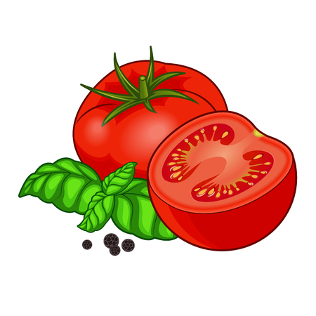 Fresh red tomato full and half with green basil and black pepper with shadows and highlights isolated on white background isometric front view. Illustration