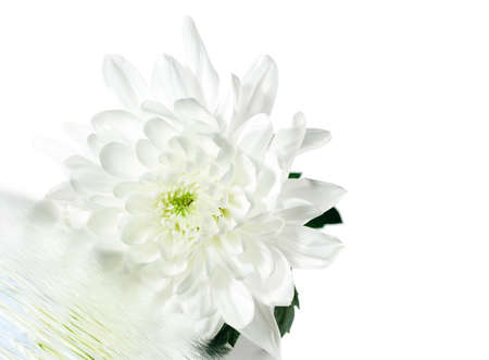 White Flower with Green Leaf Isolated on White Background Stock Photo - 4793486