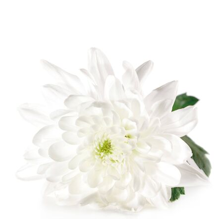 White Flower with Green Leaf Isolated on White Background photo