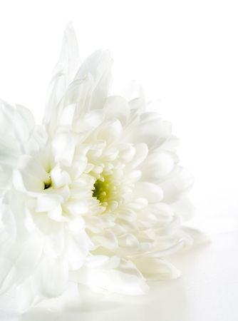 White Flower Isolated on White Background Stock Photo - 5123218
