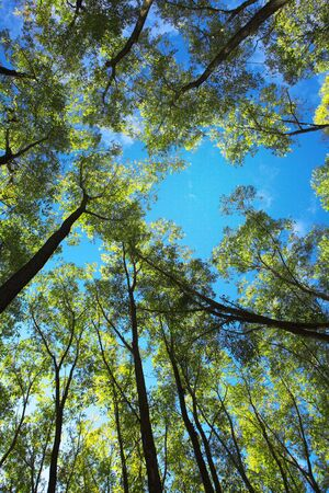 Green Trees and Blue Sky Stock Photo - 5710729