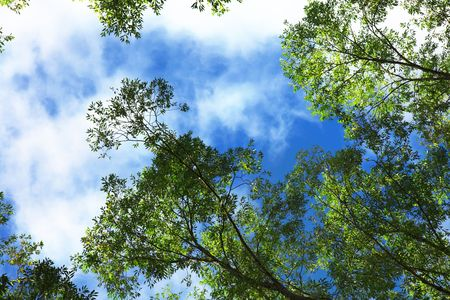 Green Trees and Blue Sky Stock Photo - 5711353