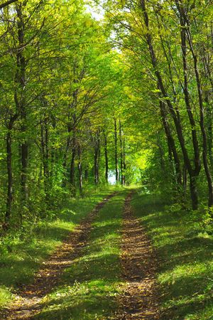 Earth Road in Summer Forest Stock Photo - 5711343