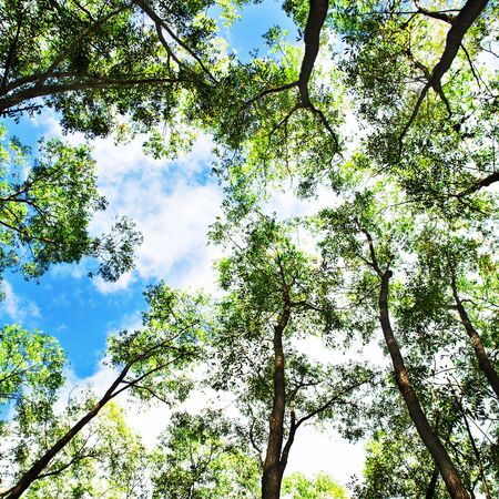 Trees on Blue Sky Background Stock Photo - 6781104