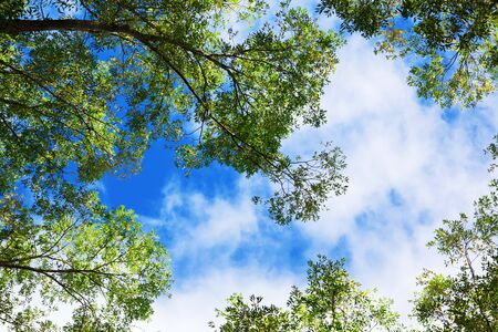 Green Trees and Clouds Stock Photo - 7915659