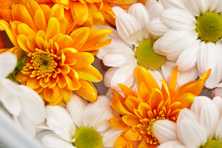Flowers background -?loseup of White and Orange Flowers 写真素材