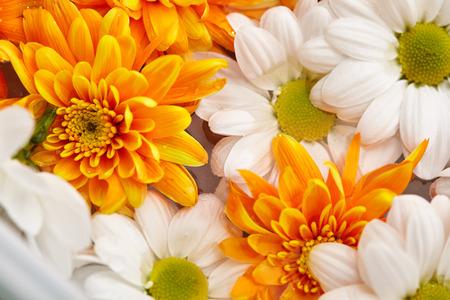 Fond de fleurs -? Loseup of White et Orange Flowers Banque d'images - 73339846