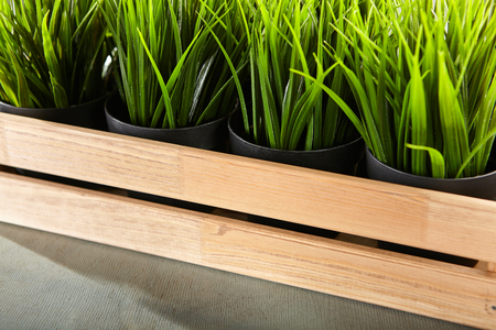wood grass: Potted Grass Flower in Wooden Box on Grey Wood Background
