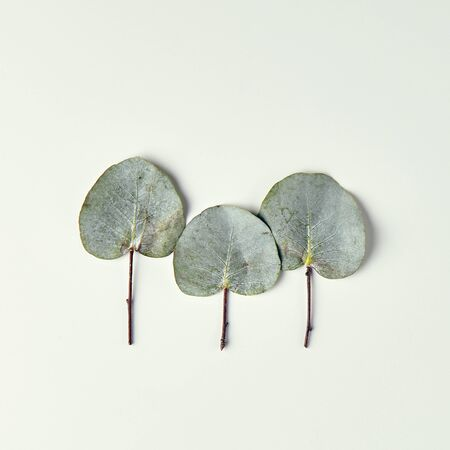 winter fashion: Nature Minimal Concept - Winter Forest Treeline made of green leaves on bright background. Flat Lay