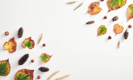 Creative minimal autumn concept. Composition made of autumn leaves. Flat Lay. Top View