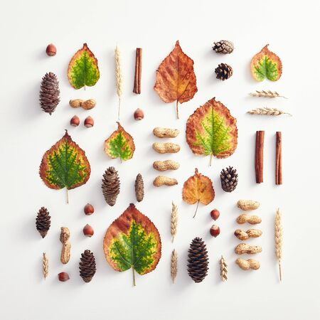 Creative minimal autumn concept. Composition made of autumn leaves. Fall Flat Lay. Top View Stockfoto