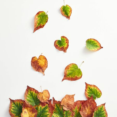 Creative minimal autumn concept. Top View of autumn leaves. Fall Flat Lay. Stockfoto