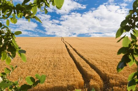 road in field with gold ears of wheat under hole in sky Stock Photo - 8870804