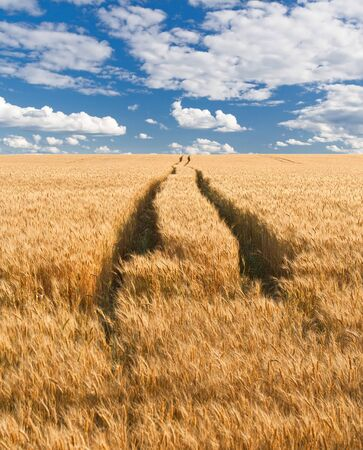 road in field with gold ears of wheat under hole in sky photo