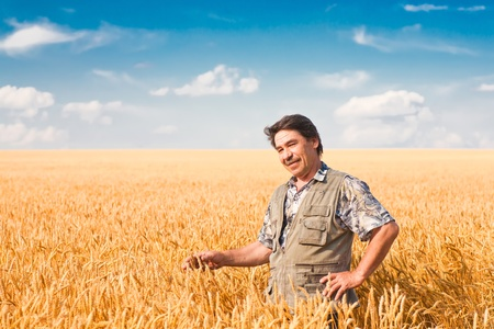 farmer's: farmer standing in a wheat field, looking at the crop