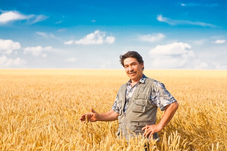 grain fields: farmer standing in a wheat field, looking at the crop