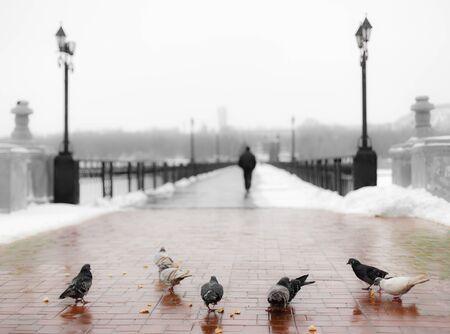 miettes: Pigeons manger les miettes sur le pont d'hiver Banque d'images