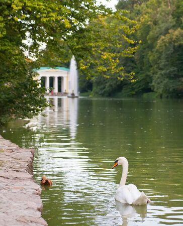 swans in the lake with a fountain. Uman. Ukraine photo
