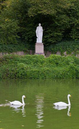 swans in the lake . Uman. Ukraine photo