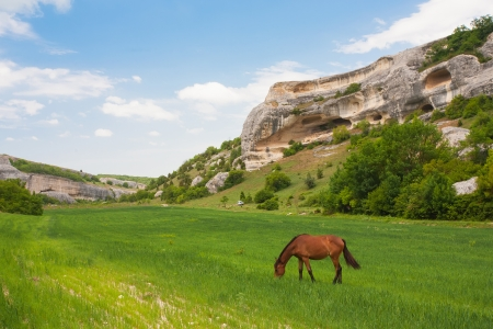 Green field, mountains and horses, Crimea, Ukraine Stock Photo - 13824090
