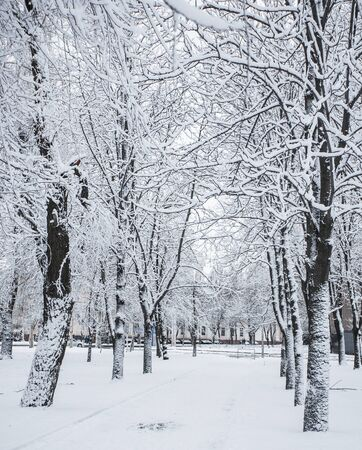 Winter park covered with fresh white snow Stock Photo - 16756200