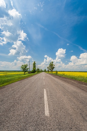 Rural road with fields of canola under the blue sky Stock Photo - 17296233