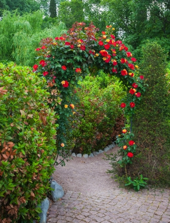 Rose Arch in English Country Garden  in the Nikitsky botanical garden. Crimea. Ukraine