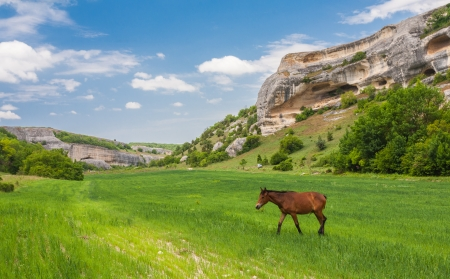 Green field, mountains and horses, Crimea, Ukraine Stock Photo