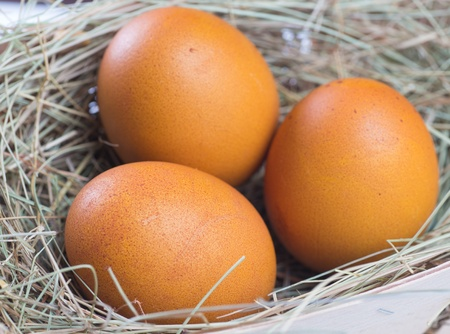 Macro shoot of brown eggs at hay nest in chicken farm Stock Photo - 18986548