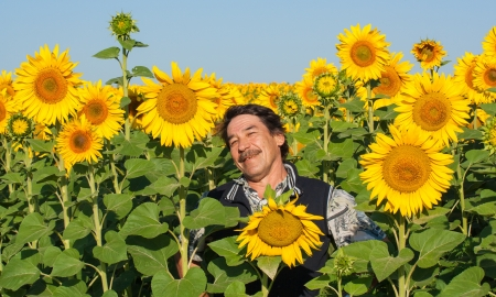 farmer standing in a sunflower field, looking at the crop Stock Photo