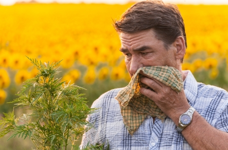 hayfever: man in field blowing his nose and suffering from hay fever
