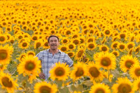 farmer standing in a sunflower field, looking at the crop photo