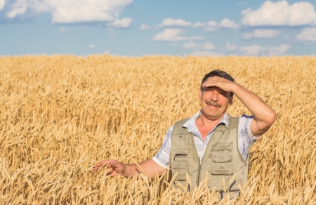 farmer standing in a wheat field, looking at the crop photo