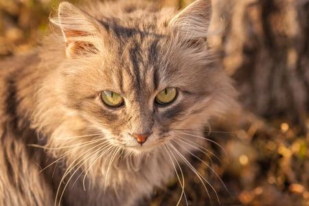 Beautiful kitty sitting on the autumn tree photo