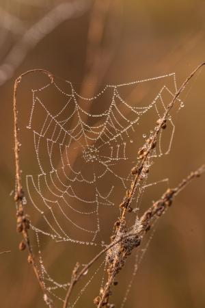 The spider web (cobweb) closeup background. Selective focus photo