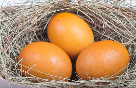 Macro shoot of brown eggs at hay nest in chicken farm Stock Photo - 25491022