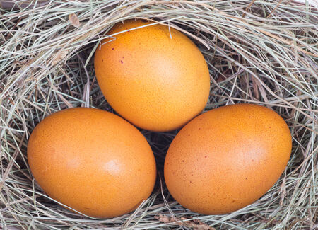 brown eggs at hay nest in chicken farm Stock Photo - 25749271