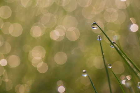 Fresh morning dew on spring grass, close up with shallow DOF. photo